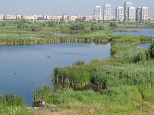 Nature knows best: How working with wetlands can reduce flood risks in cities