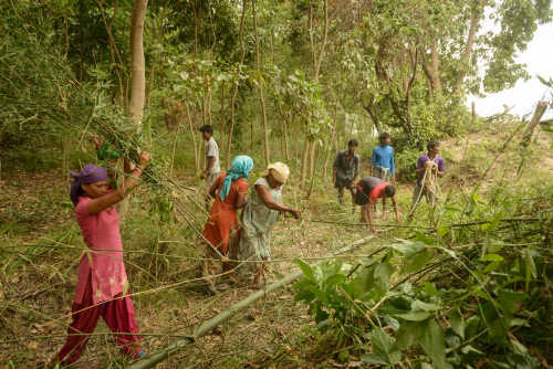 Women participants in Mercy Corps' M-RED program harvesting bamboo to use in biodyke construction for flood protection