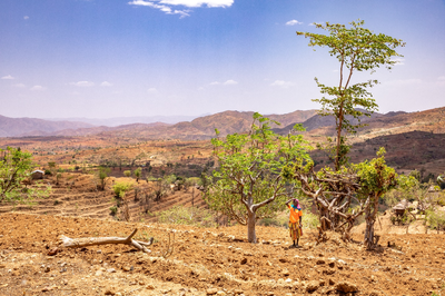 During the dry season in Ethiopia, there is no water in the river and farmers must dig through the sand until they hit water.