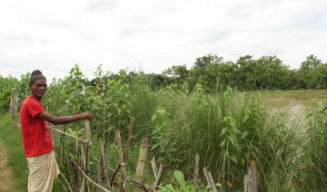 bio-dyke, nature based solution for flood protection
