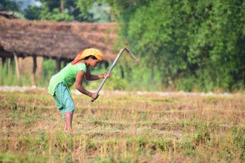 Woman working in Field, Bardiya